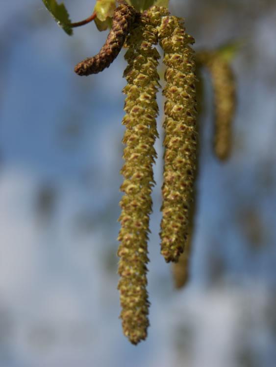 Våren kommer